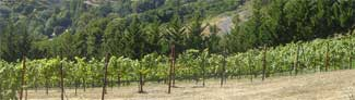 Boulder Ridge Vineyard.